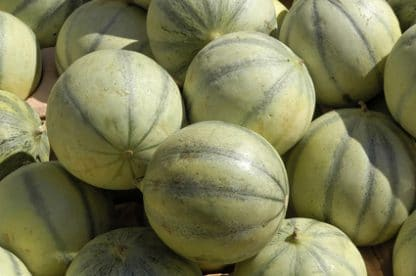 Melon Strasbourgeoise de Proxieat.com