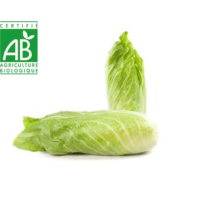 Endive bio salade de proximité de Strasbour