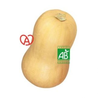 Courge Buttermut Bio made in Alsace