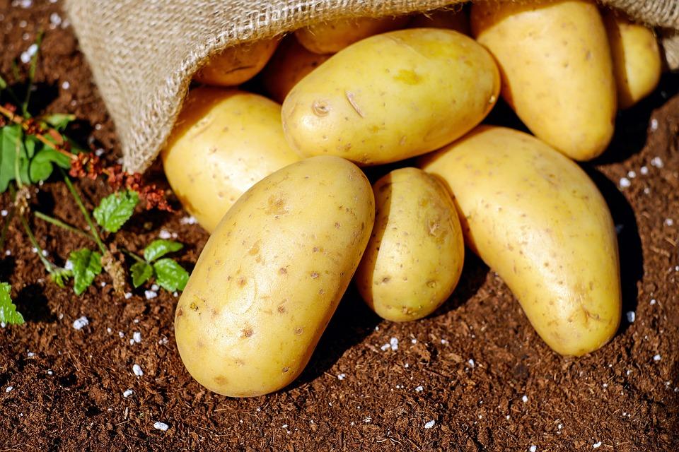 agriculture bio naturel