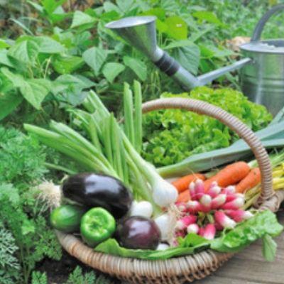 Image de panier de fruits et légumes Bio de Proxieat
