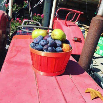 Panier de fruits Bio