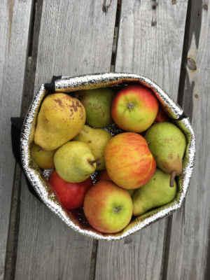 panier de fruit Bio d'Alsace