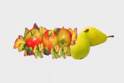 Panier de fruit Bio