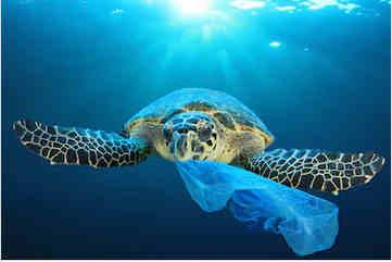 tortue déchet plastique