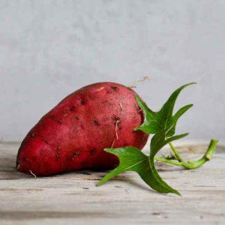 Patate douce Bio Fruits et légumes Bio d'Alsace1