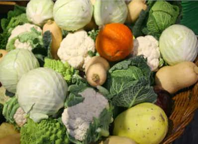 Fruits et légumes Bio d'Alsace disponible pour le mois novembre