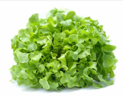 image de la salade scarole