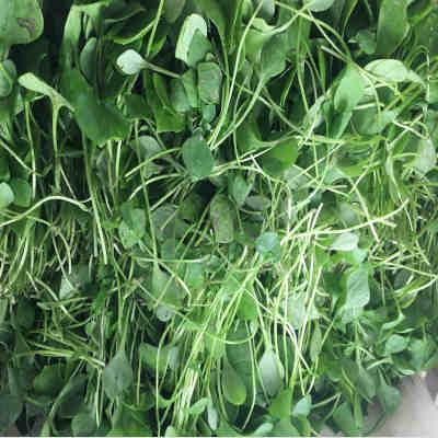 Salade vert Pourpier Bio1