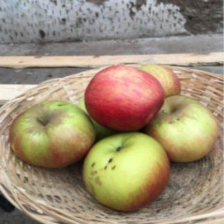 Pommes Bio Idared