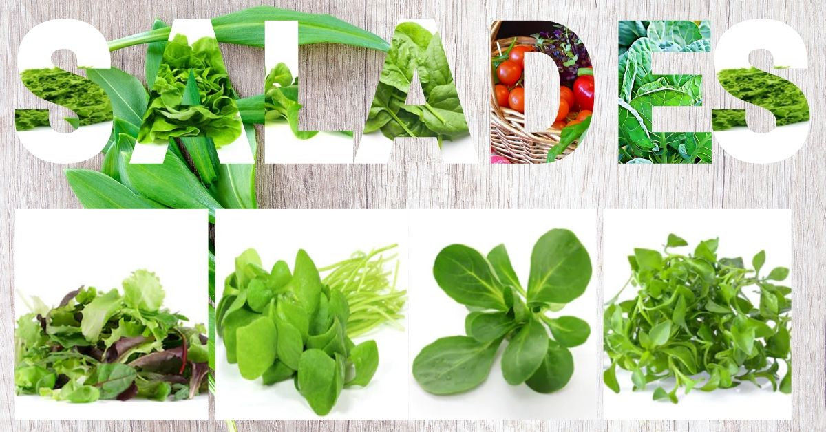 Les petites salades Bio de l'hiver