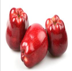 Pomme Bio d'Alsace Red delicious