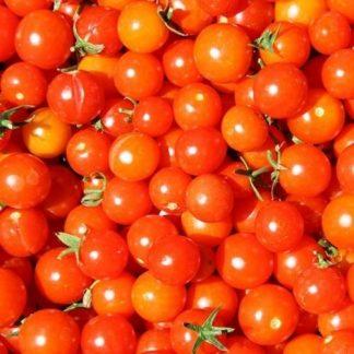 tomate cerise Bio multicolor